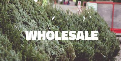wholesalehome